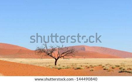 Panorama of the Dune 45 area near Sossusvlei, Namibia - stock photo