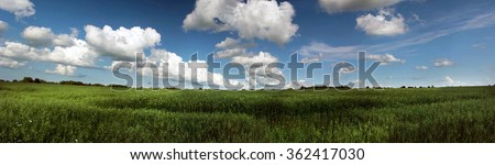 Panorama of the field. Big clouds. Rural landscape. Nature oat fields. The big sky. The line of the horizon. Beautiful view of a green field.  - stock photo