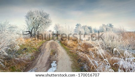 Panorama of the frosty morning in forest