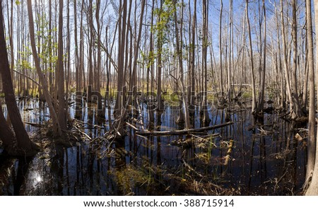 Panorama of the Okefenokee Swamp in Georgia, USA - stock photo