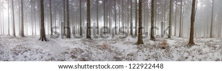 panorama of the winter forest of spruce - stock photo