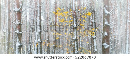 panorama of the winter forest of spruce.cold misty morning in winter forest on mountains.