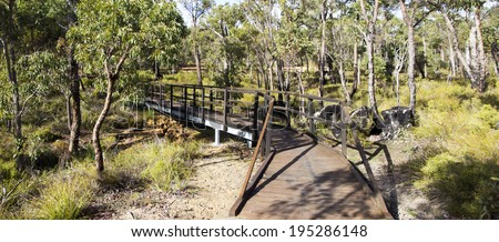 Panorama of the wooden board walk in  the Crooked Brook national park in south western Australia  with Corymbia calophylla ( Eucalyptus calophylla,Marri , Port Gregory Gum )  trees. - stock photo