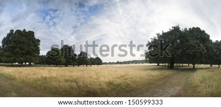 Panorama of trees and blue Summer sky in park landscape
