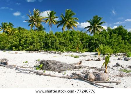 Panorama of tropical beach, Maupiti, French Polynesia, Society Islands - stock photo