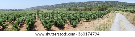 Panorama of vineyard and track in south France                                - stock photo