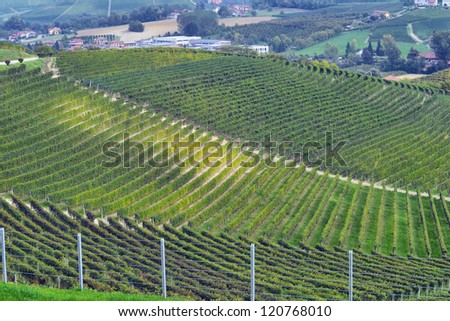 panorama of vineyards in autumn in northern Italy - stock photo