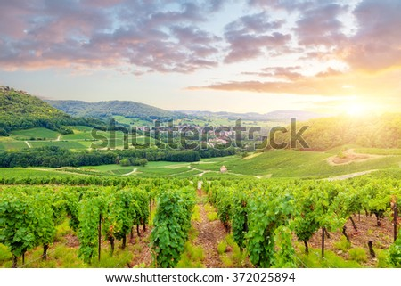 Panorama of vineyards in Burgundy. France - stock photo