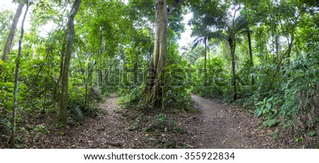 Panorama of walking trail and tropical rain forest with green trees, bushes and foliage. Outdoors hike road in Serere Reserve Madidi. Bolivia - stock photo