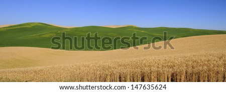panorama of wheat fields, Washington State, USA - stock photo