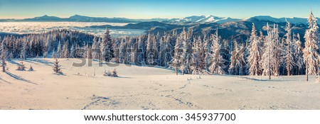Panorama on the sunny winter morning in the Carpathian mountains - stock photo