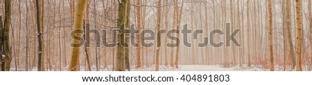 Panorama photo of mist in the forest in the winter