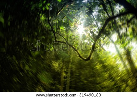 Panorama view in the forest with the ray of light from the sunshine - stock photo