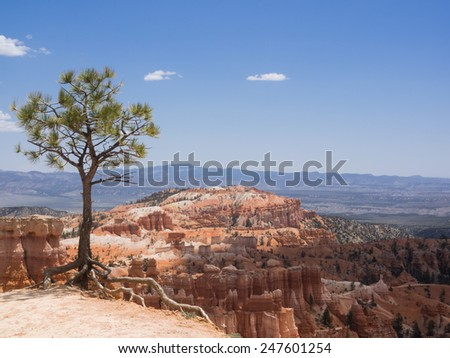 Panorama view of Bryce Canyon National Park with pine in the foreground - stock photo