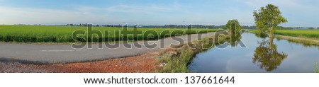 Panorama view of paddy field - stock photo