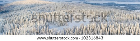 Panoramic aerial view of winter forest with frosty trees and skiers. Kuopio, Finland