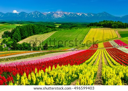 Panoramic colorful flower field and blue sky in Shikisai-no-oka, Biei, Hokkaido, Japan