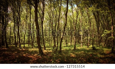 Panoramic dense forest