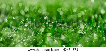panoramic grass banner or background