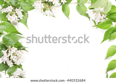 Panoramic Green leaves and flowers on white background - stock photo