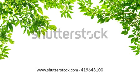 panoramic Green leaves on white background - stock photo
