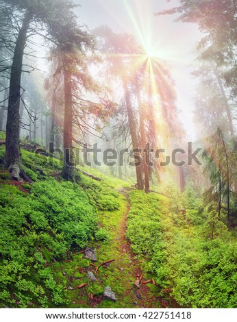Panoramic landscape of an autumn fir forest in the rain at dawn. Deserted footpath goes into the misty distance, dew hanging on every twig and grass, melancholy and serenity in the air - stock photo
