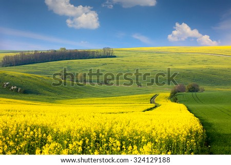 Panoramic landscape of colorful yellow-green hills with ground road, blue sky and clouds  - stock photo