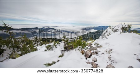 Panoramic mountain landscape with pine trees in the foreground. Carpathians - stock photo