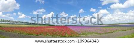 panoramic shot of a field with blooming flowers - stock photo