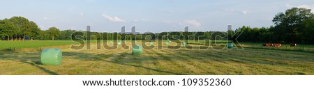 panoramic shot of a meadow with hay bales wrapped in plastic