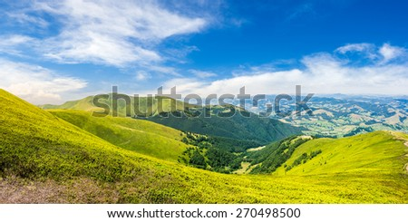 panoramic summer landscape with conifer forest  on the grassy hillside meadow  in high mountain - stock photo
