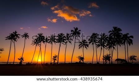 Panoramic tropical palm trees sunrise of Hawaii - stock photo
