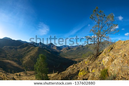 Panoramic view of a tree growing on a steep hillside in Sequoia National Forest - stock photo