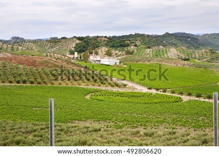 Panoramic view of a vineyard in Calabria (Ciro) - Italy