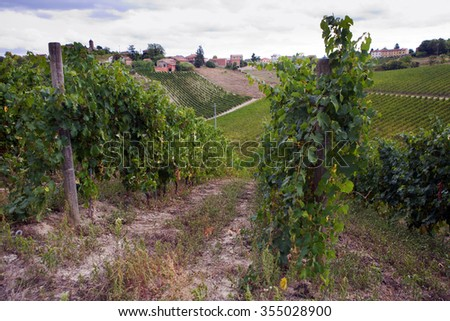 Panoramic view of a vineyard in Piedmont (Colli Tortonesi) - Italy