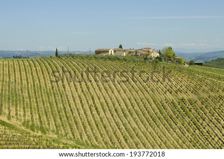 Panoramic view of a vineyard in the Chianti region of Tuscany, Italy  - stock photo
