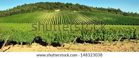 Panoramic view of a vineyard in the Tuscan countryside - stock photo