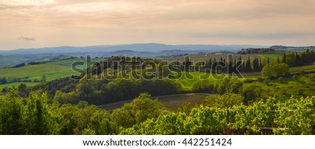 Panoramic view of a vineyard in the Tuscan countryside at sunset - stock photo