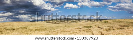 Panoramic view of a wheat field in Macedonia - stock photo