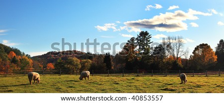 Panoramic view of fall meadow with sheep in Vermont,USA - stock photo