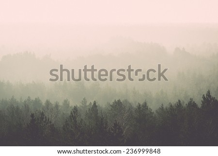 panoramic view of misty forest. far horizon. - retro, vintage style look - stock photo