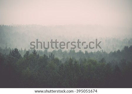 panoramic view of misty forest. far horizon - vintage film effect - stock photo