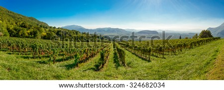 panoramic view of the French vineyards - stock photo