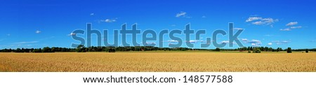 panoramic view of wheat field with blue sky - stock photo