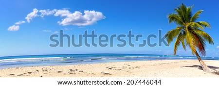 Panoramic view of white sand beach with palm, Dominican Republic - stock photo