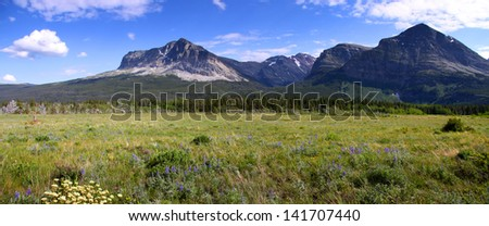 Panoramic view of wild flowers in Glacier national park - stock photo