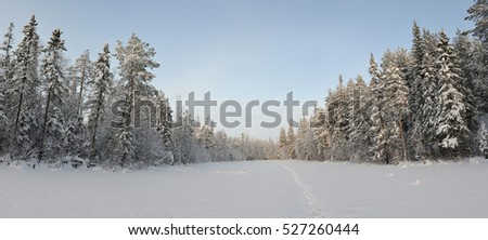 Panoramic view of wintery snow covered forest view.