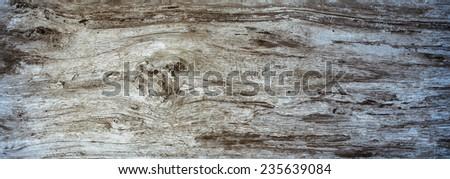 Panoramic wood texture - stock photo