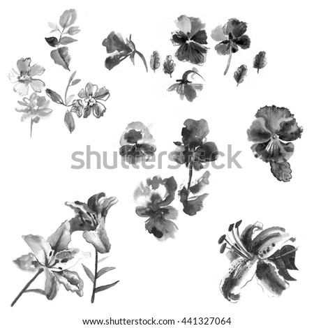 Pansies. Botany. Set. Vintage. Black and white illustration in the style of watercolor.
