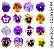 Pansies on White background - stock photo